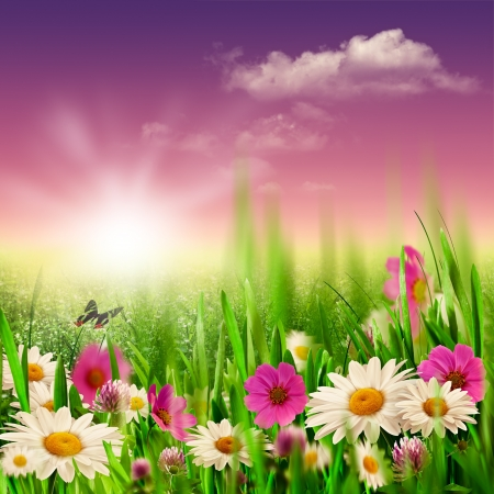 Beauty evening on the meadow, natural backgrounds Stock Photo