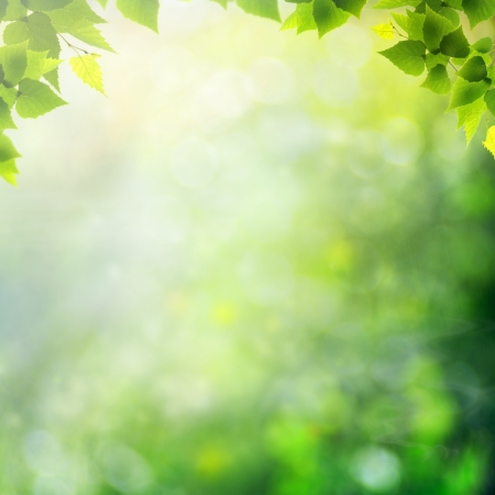 defocused: Miracle day on the summer meadow. Abstract natural backgrounds