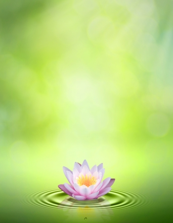 zen water: Water lily. Abstract oriental backgrounds