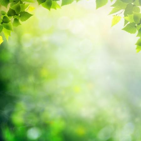 natural light: Beauty d�a soleado en el bosque, fondos abstractos naturales