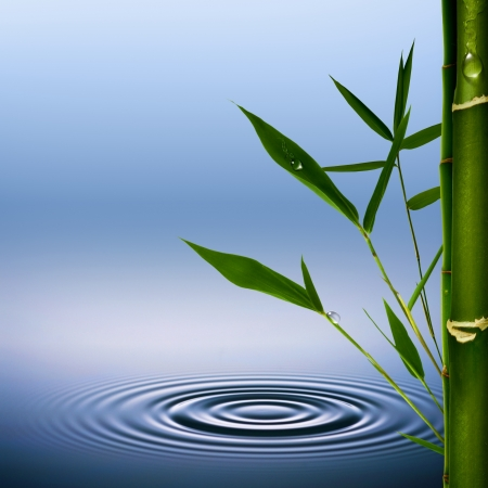 zen water: Bamboo grass with dew droplets. Abstract environmental backgrounds