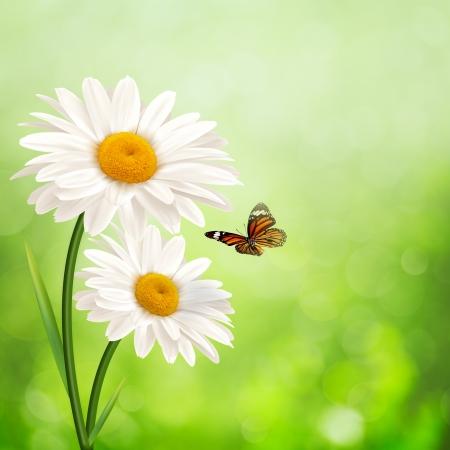 幸せな草原。デイジーの花と抽象的な夏の背景 写真素材