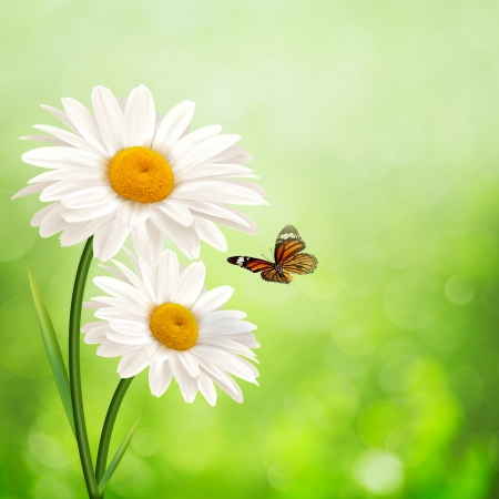 Happy meadow. Abstract summer backgrounds with daisy flowers Stock Photo
