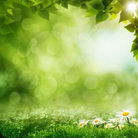 Beauty Morgen im grünen Wald, eco Hintergründe Standard-Bild