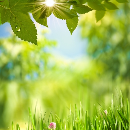 Beauty Summer Day  Abstract environmental backgrounds for your design photo