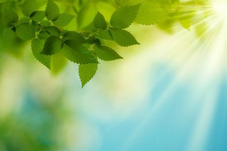 건강: 뷰티 여름 날 추상 디자인에 환경 적 배경