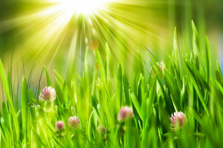 Beauty summer day on the meadow, environmental backgrounds Stock Photo - 20214528