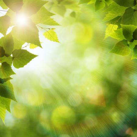 sunshine: D�a de verano brillante en el bosque, fondos ambientales Foto de archivo