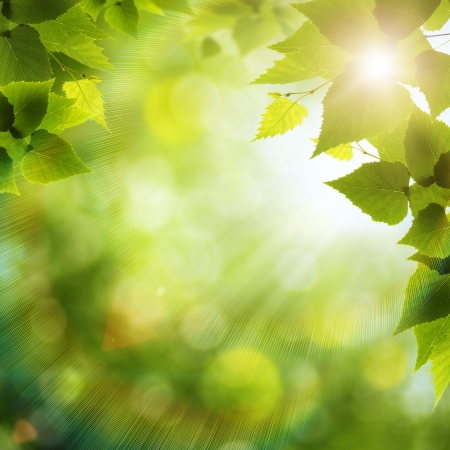 background nature: Bright summer day in the forest, environmental backgrounds