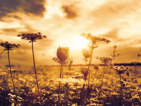 Under theevening sun, abstract natural backgrounds with wild flowers