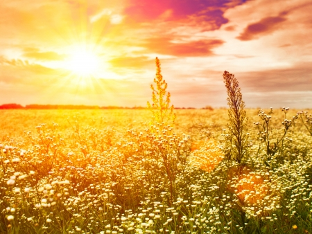 late sunset on the summer meadow, natural landscape