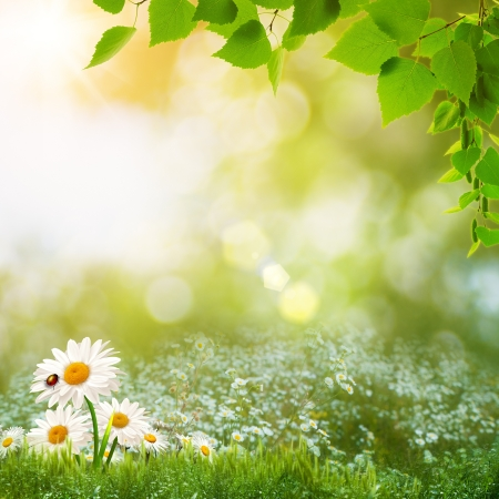 Beauty summer day on the meadow, abstract natural landscape Stock Photo