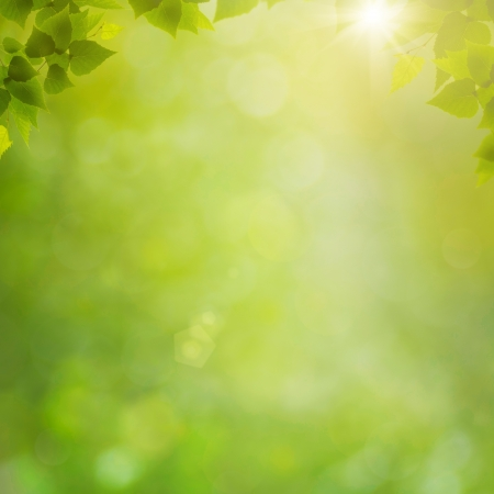 green leaf: Summer in the forest, abstract natural backgrounds with fresh foliage and bokeh Stock Photo