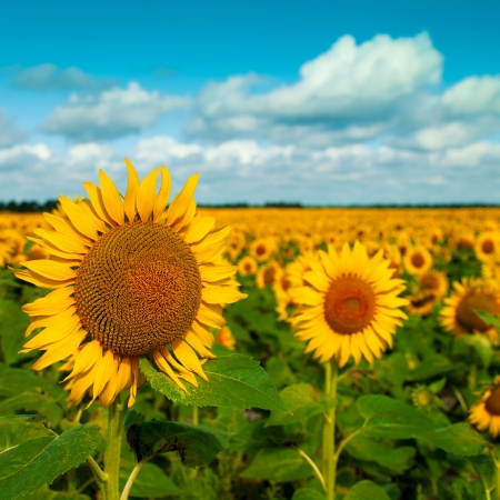 Golden flowers, optimistic summer landscape for your design photo