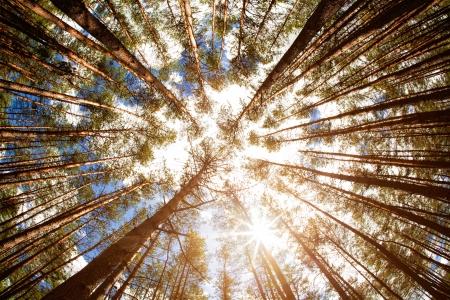 Looking up, summer backgrounds for your design Standard-Bild