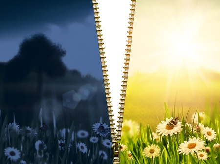 day and night. Natural backgrounds with beauty chamomile flowers photo