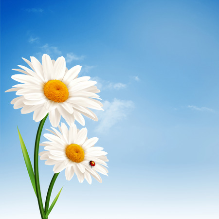 Daisy flowers. Abstract natural backgrounds for your design photo