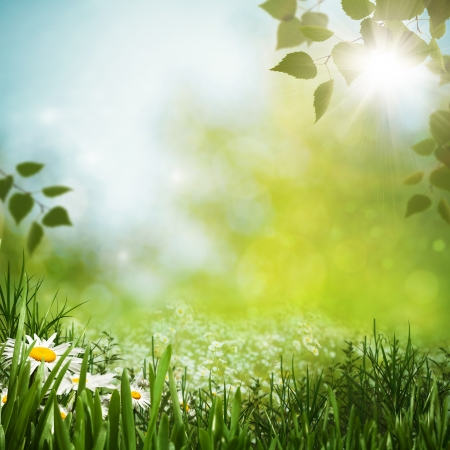 Green meadow with daisy flowes, natural backgrounds for your design Foto de archivo