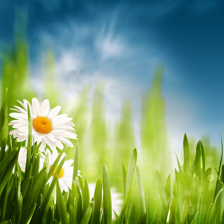 Daisy on the meadow, abstract natural backgrounds for your design photo