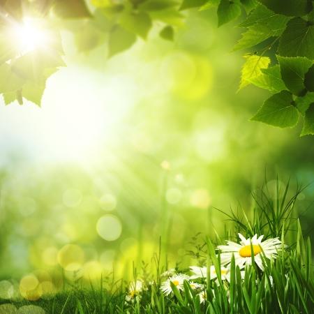 Beauty zomer bos achtergronden voor uw ontwerp