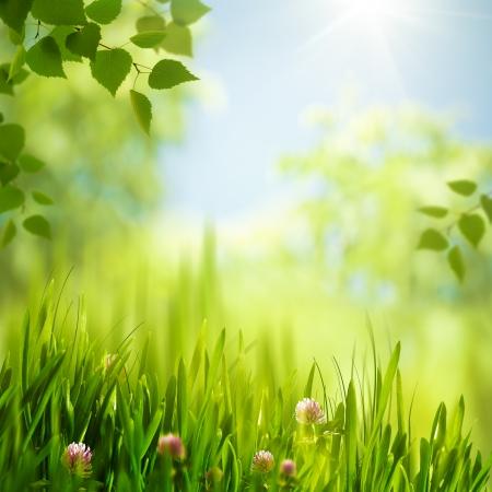 Schoonheid zomerdag in het bos, met seizoensgebonden abstracte achtergronden Stockfoto