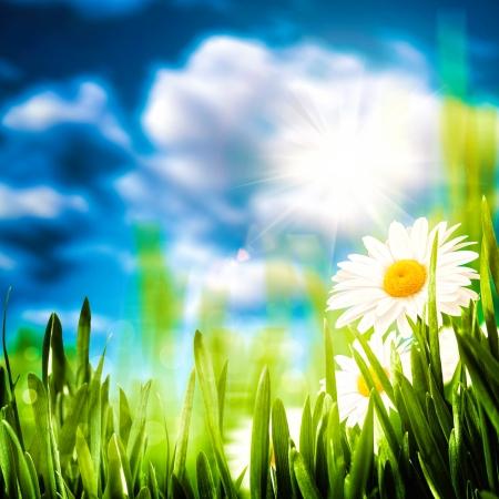 Daisy flowers on the meadow, seasonal backgrounds