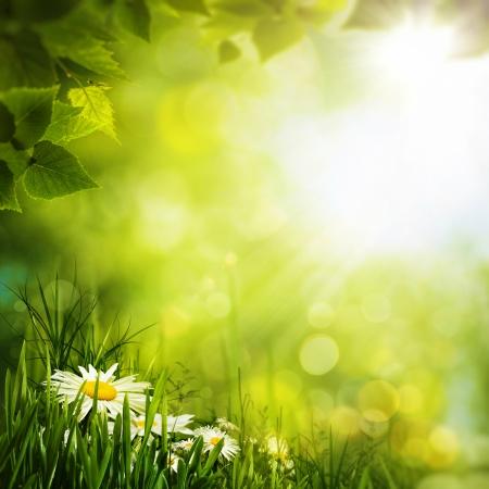 Daisy bloemen op de weide, seizoensgebonden achtergronden