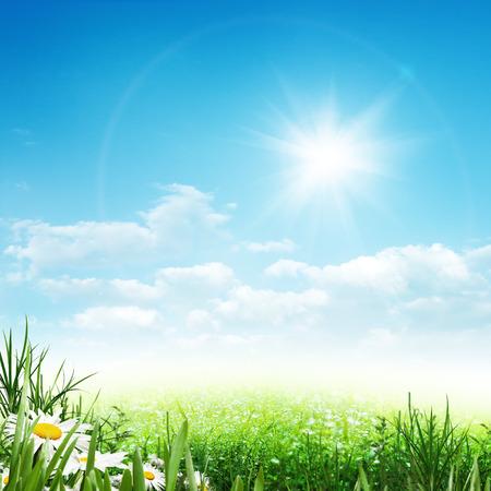 primavera: Verano de la belleza, fondos ambientales abstractos con flores de margarita Foto de archivo