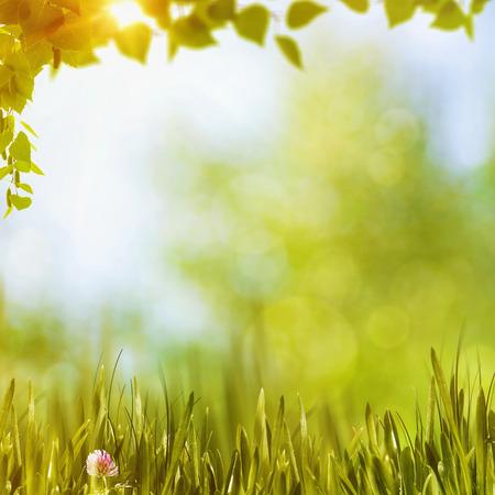 夏日森林,抽象的自然背景