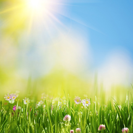 夏天草甸在明亮的黄色太阳下,自然本底