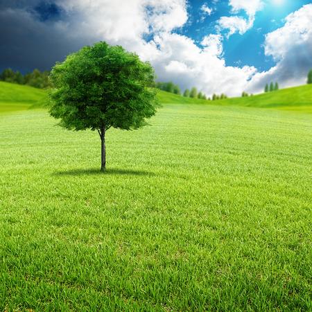 Schoonheid zomerse dag op de groene weide, natuurlijke landschap Stockfoto
