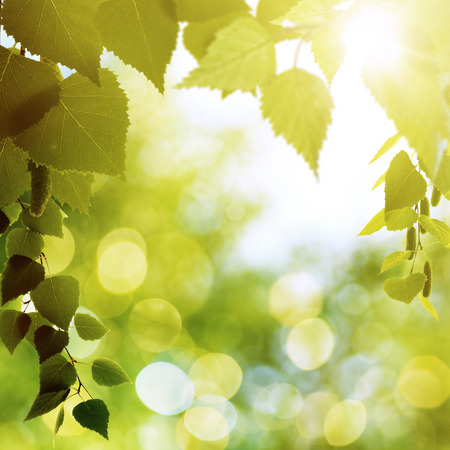 natural beauty: Abstract natural backgrounds with beauty bokeh Stock Photo