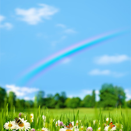 Pasture rural landscape with beauty flowers, butterfly and rainbow photo