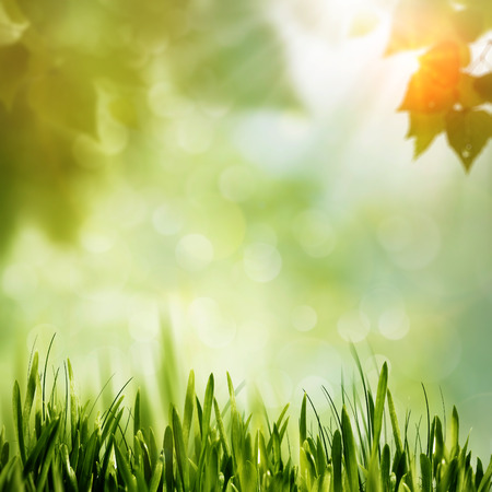 sun shine: Green Nature, abstract environmental background