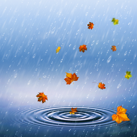 autumnal backrounds with fallen foliage and rain drops photo