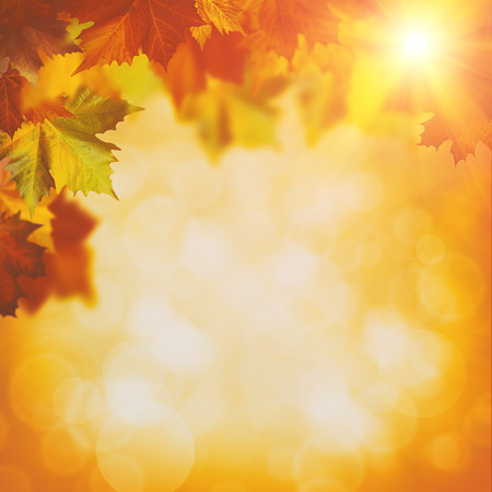 Abstract autumnal backgrounds with maple foliage and beauty bokeh Foto de archivo
