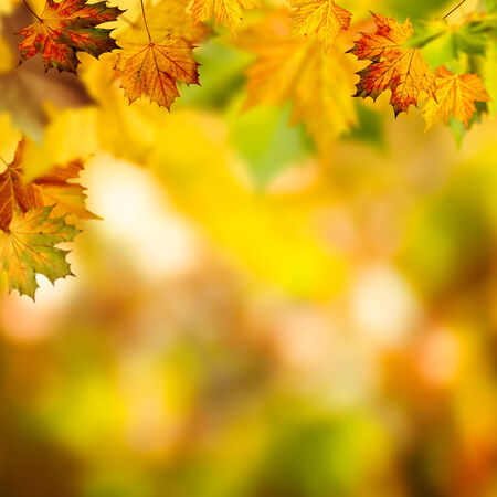 branches and leaves: Abstract autumnal backgrounds with beauty bokeh Stock Photo