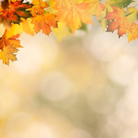 Abstracte herfst achtergronden wit gele maple bladeren