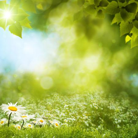 summer landscape: Summer landscape.  Stock Photo