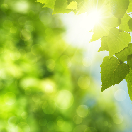 Abstract natural backgrounds with green foliage and sun beam Stock Photo