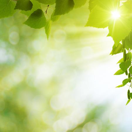 feuillage: �t� milieux saisonniers pour votre conception