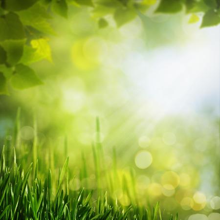 夏季季节的背景为您的设计