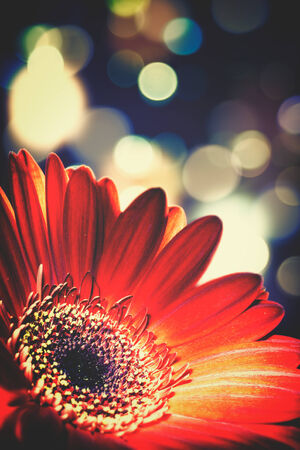 beaty: Abstract floral backgrounds with beaty bokeh Stock Photo