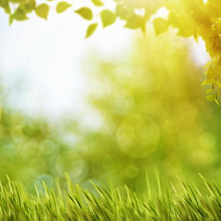 抽象的自然背景与夏季树叶和明亮的阳光
