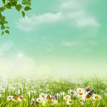夏日明媚的草地,自然的背景