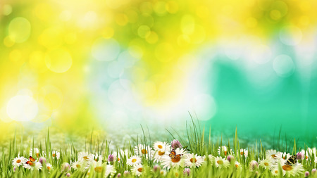 Beauty summer day on the meadow. Abstract natural backgrounds for your design