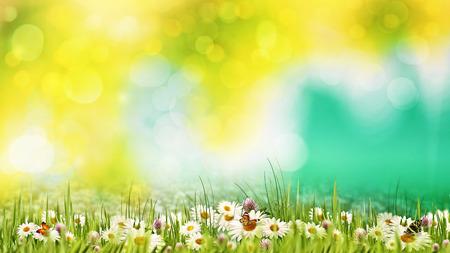 Schoonheid zomerdag op de weide. Abstracte natuurlijke achtergronden voor uw ontwerp