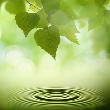 Résumé milieux naturels. Les feuilles vertes avec rosée du matin Banque d'images - 43261171