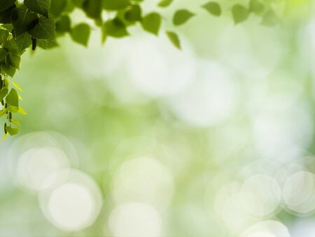 foliage: abstract natural backgrounds with green foliage and beauty bokeh