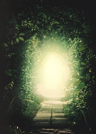 paz interior: Teleport a otro universo. Túnel en el bosque. Orígenes naturales